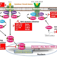 A Brief Update on STAT3 Signaling: Current Challenges and Future Directions in Cancer Treatment