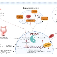 APE1/Ref-1 – One Target with Multiple Indications: Emerging Aspects and New Directions