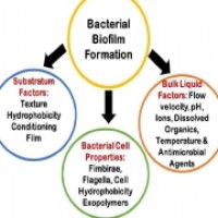 Bacterial Biofilms and Implant Infections: A Perspective