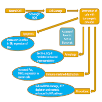 Dose-dependent Effects of Vitamin C on Cancer Regulation: A Review