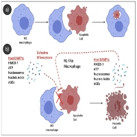 Efferocytosis and Anthrax: Implications for Bacterial Sepsis?