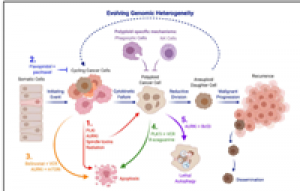 Emerging Strategies to Attack Polyploid Cancer Cells