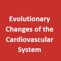 Evolutionary Changes of the Cardiovascular System  Initiated by Reduced Atmospheric O2 Gave Rise to  Mammalian and Avian Endothermy