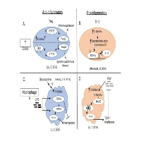 Friend or Foe? Opposing Functions of O-GlcNAc in Regulating Inflammation