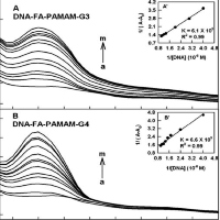Functionalized Folic Acid with Chitosan and PAMAM Dendrimers for Delivery of DNA and RNA