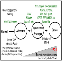 Immunological Features with DNA Microsatellite Alterations in Patients with Colorectal Cancer