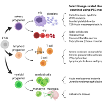 Mechanistic and Translational Advances Using iPSC-Derived Blood Cells