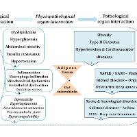 Metabolic Syndrome is an Important Cornerstone in the Health-disease Line and Pathological Organ Interaction