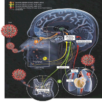 Neurological Manifestations Associated with SARS-CoV-2 Invasion of the Autonomous Nervous System