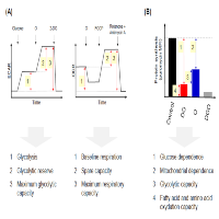 Profiling the Energy Metabolism at the Cell Subpopulation Level