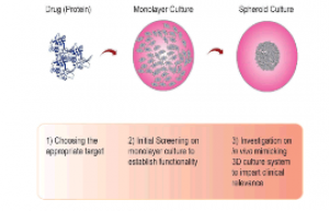 Protein Therapeutics from Monolayer to Spheroids- A Model for Preclinical Investigations