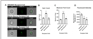 Quantifying Neural Stem Cell-Derived Extracellular Vesicle Uptake Using Imaging Flow Cytometry