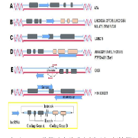 Relationship of lncRNA to Breast Cancer