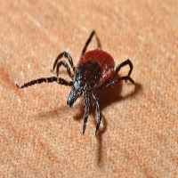 The Global Rise of Chronic Diseases: Why Broaden the Paradigm to Include Tick-borne Illness and Environmental Toxin Exposure?