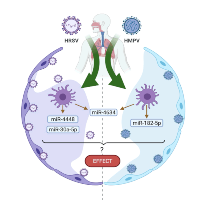 The Importance of miRNA Identification During Respiratory Viral Infections