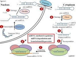 The Profiling and Role of miRNAs in Diabetes Mellitus