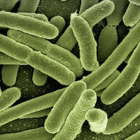 What Can Go Wrong When Applying Immune Modulation Therapies to Target Persistent Bacterial Infections